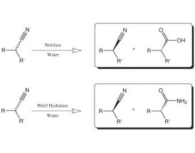 Kit of Nitrilases and Nitrile Hydratases