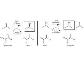 omega-Transaminases Single Use Kit