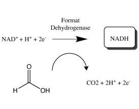 Formate dehydrogenase Kit