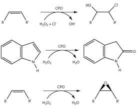 Chloroperoxidase  from Caldariomyces/Leptoxyphium fumago