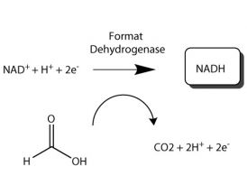 Formate dehydrogenase Single Use Kit