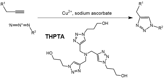 THPTA: Ligand-accelerated Click Chemistry in Aqueous Solution